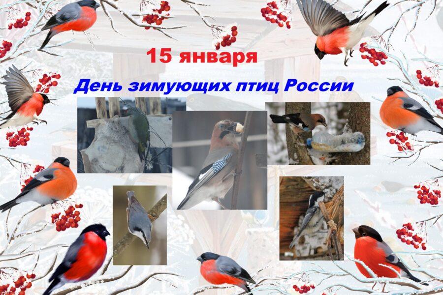 День зимующих птиц в России
