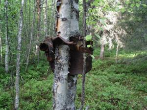 Железо войны вросшее в дерево. (1)