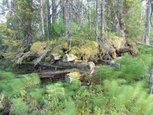 Остатки блиндажа в лесу. (1)